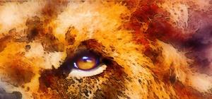 Occhi leone